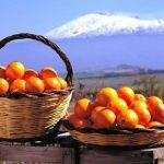 Come Avviare E-Commerce e vendere Arance di Sicilia